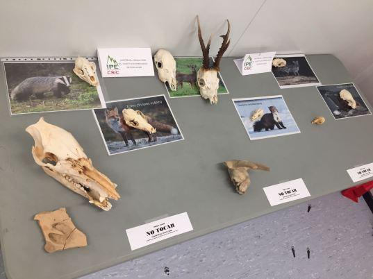 Exp Mamif_Otoño Natural 2017 (Huesca)_1